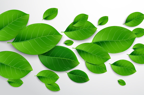 Realistic Vector Leaves