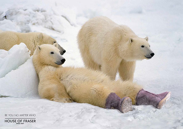 House of Fraser: Polar Bear